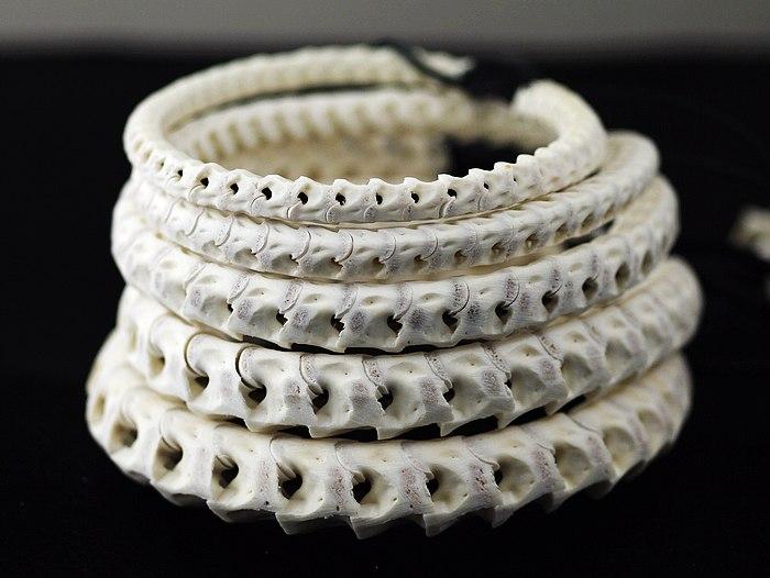Japan Gothic Jewelry Very Few Natural Snake Bone Bracelet